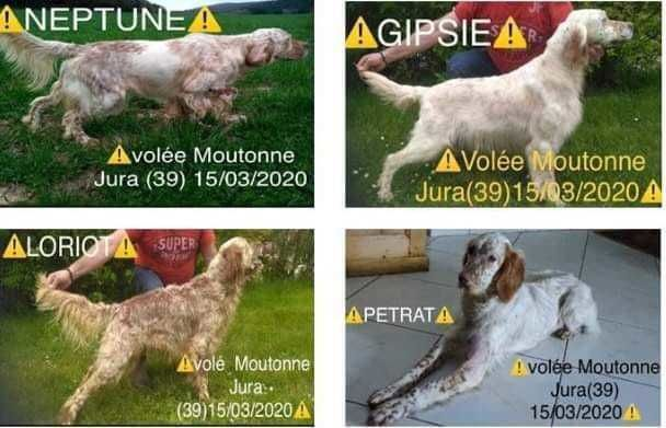 DISPARITION DE 4 CHIENS